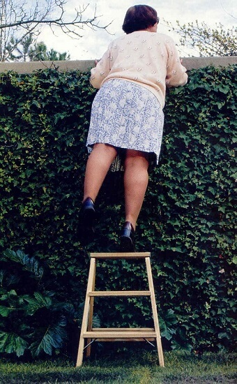 Woman standing on a step ladder and looking over a fence that is covered in ivy