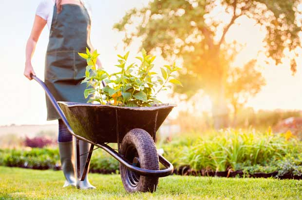 Woman pushing black wheelbarrow with plants